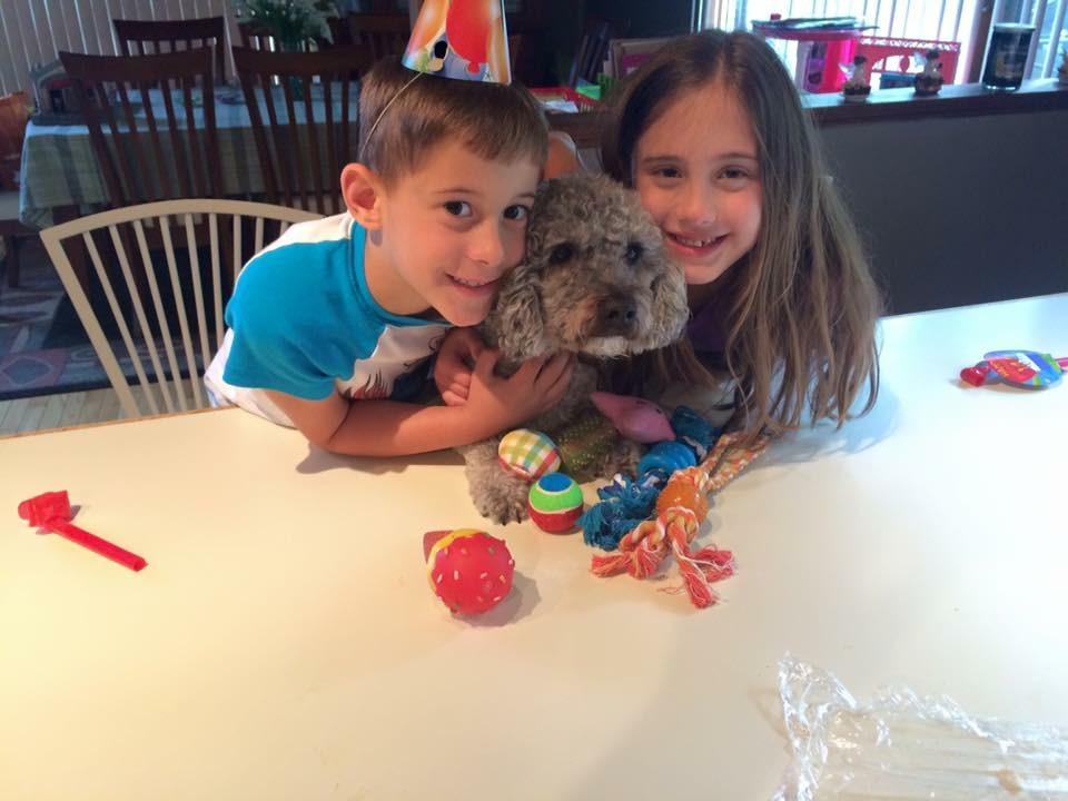 4 Ways to Celebrate National Dog Day
