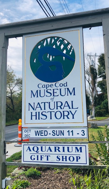 a day at the cape cod museum of natural history