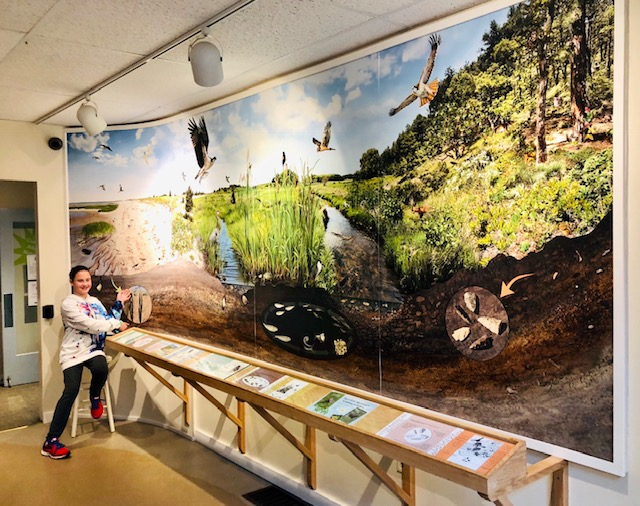 a day at the cape cod museum of natural history 5