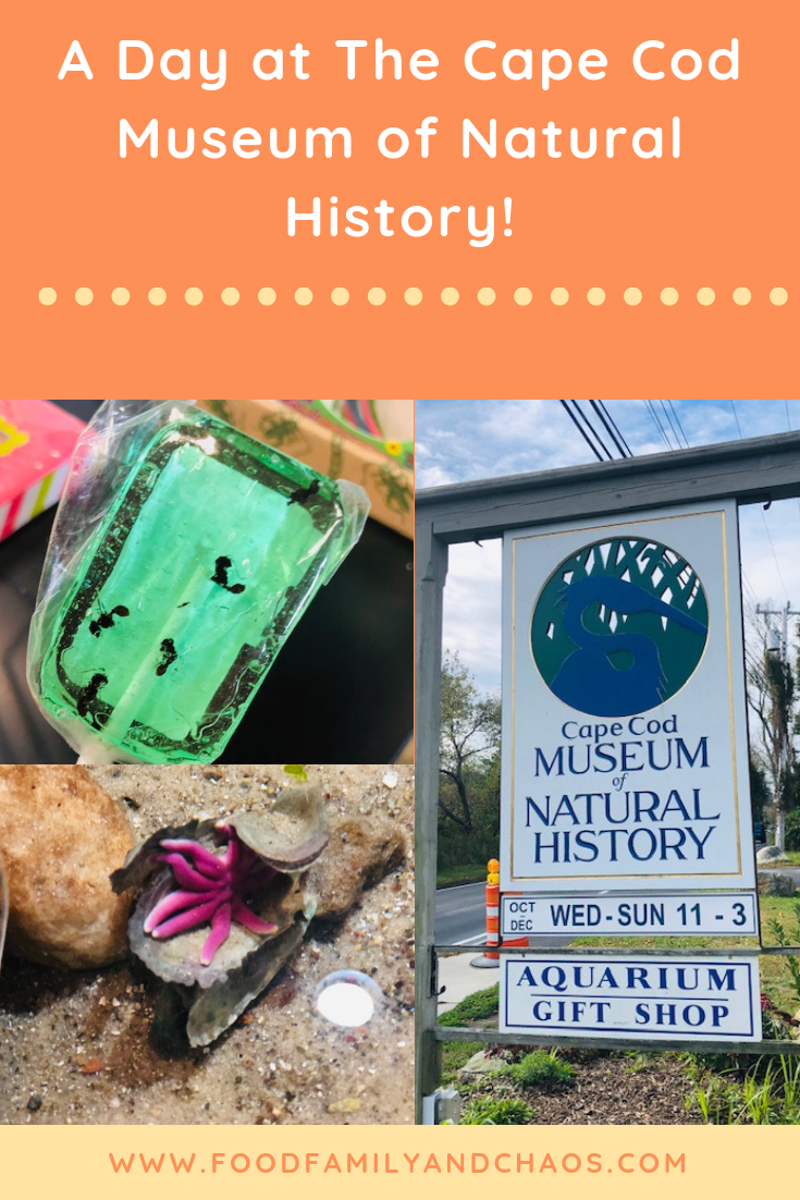 a day at the cape cod museum of natural history pin 2