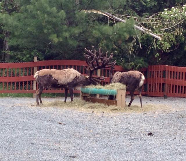 10 Reasons why we love santa's village new hampshire